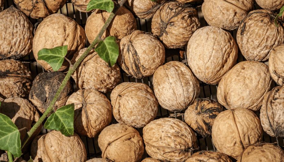 Как выбрать качественные орехи и как их хранить
