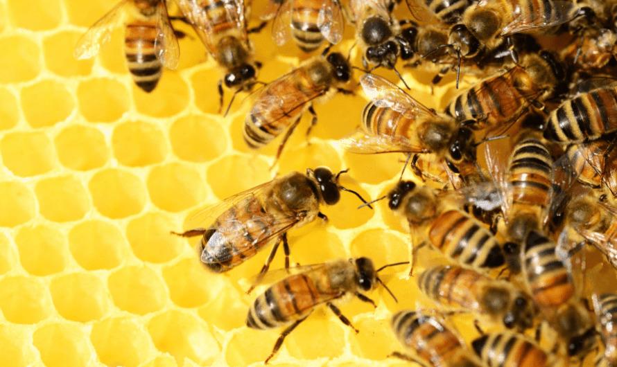 Как проверить мед при покупке