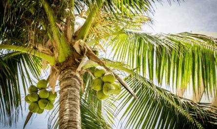 Пальмовое масло: плюсы и минусы употребления
