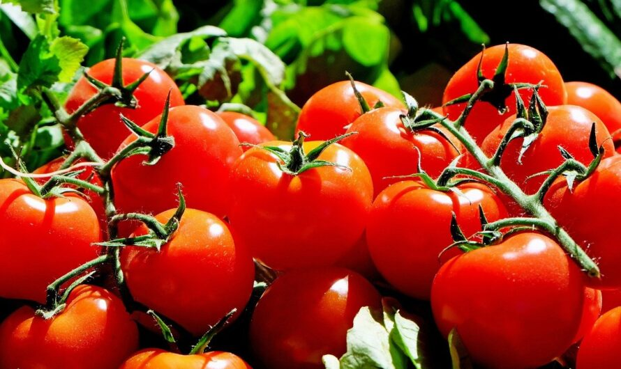 РФ сняла запрет на поставки томатов с некоторых предприятий Азербайджана